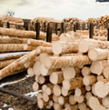 Image of Cersosimo Lumber speeds toward sustainability, powered by Turbosteam article
